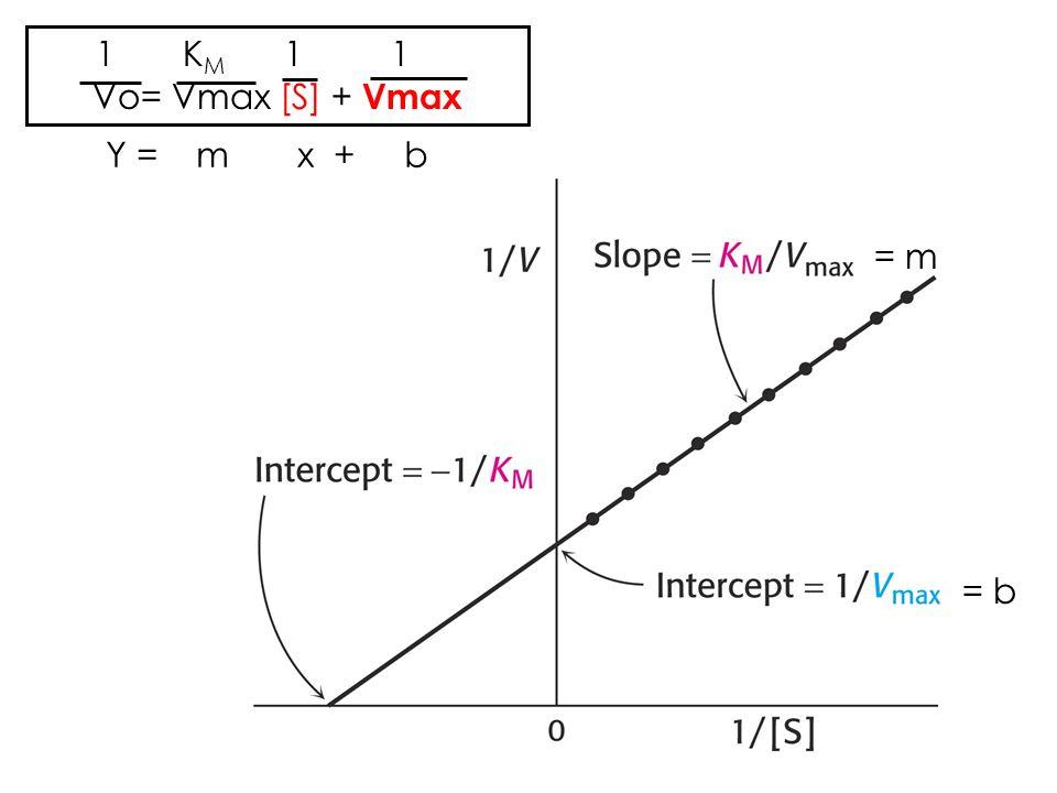 1 KM 1 1 Vo= Vmax [S] + Vmax Y = m x + b = m = b